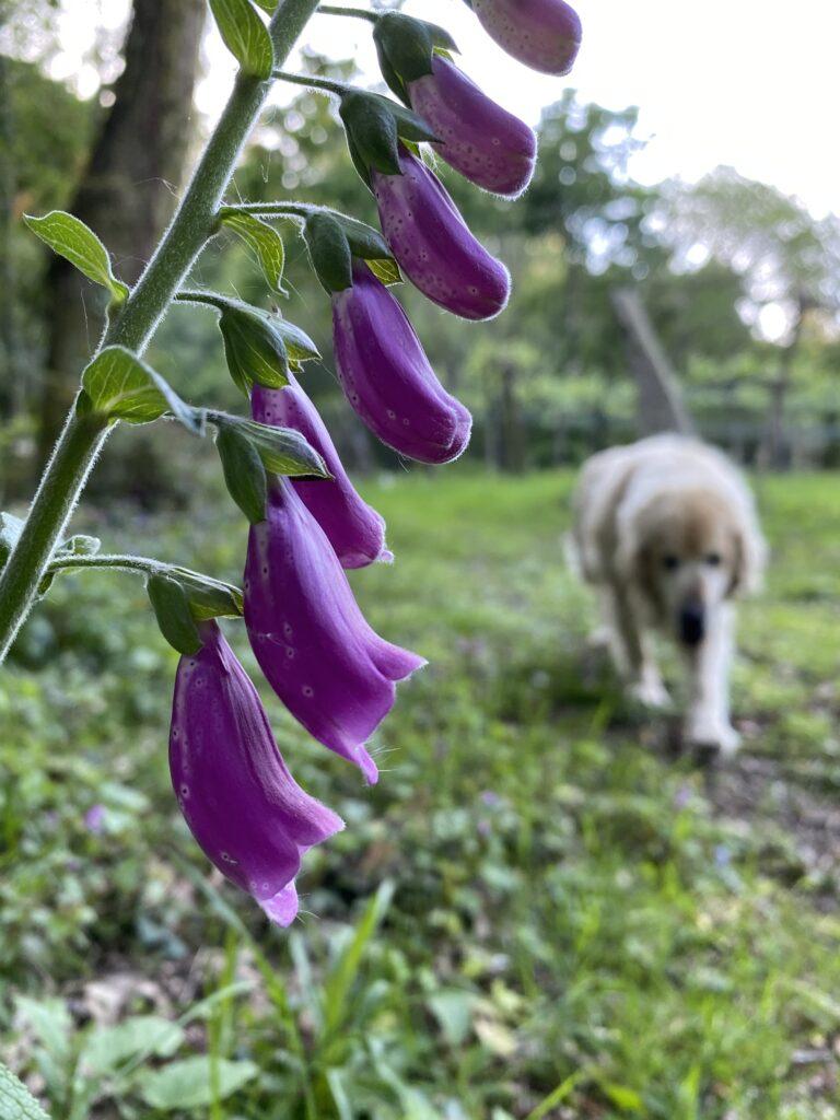 10 flores que veras en primavera en A Pobra do Caramiñal